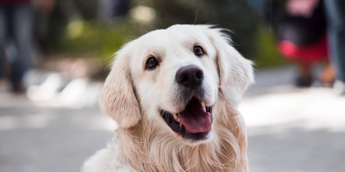 ¿Te gustan los perros? Una pareja ofrece 41,000 dólares por cuidarlos