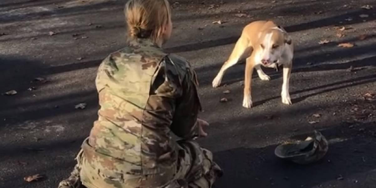 VÍDEO: Reencontro de cachorro e dona que ficaram anos separados emociona as redes sociais