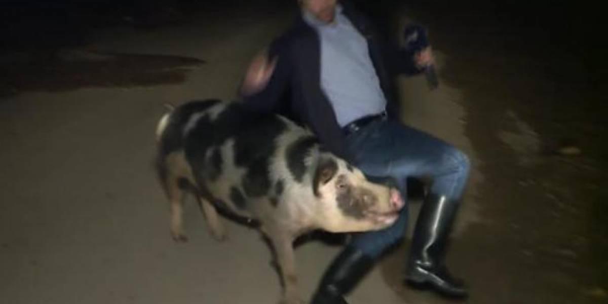 VIRAL: Reportero es atacado por un cerdo durante una transmisión en vivo