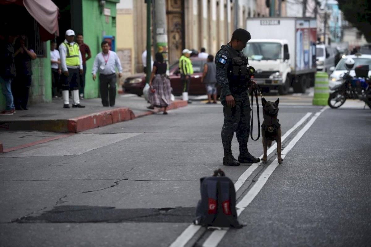 Un perro que olfatea explosivos en el Plan Belén Edwin Bercián