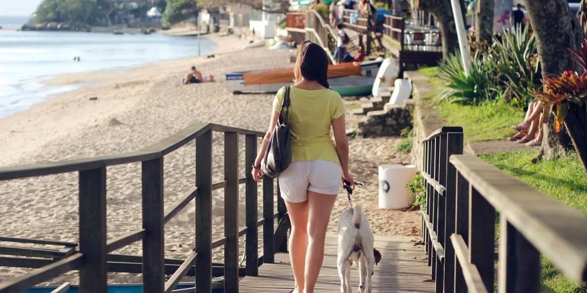 Confira cinco dicas de cuidados com pets durante viagens