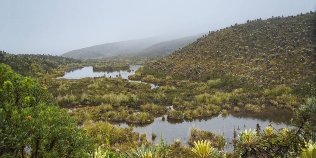 Tomar agua puede ayudar a proteger los páramos de Colombia