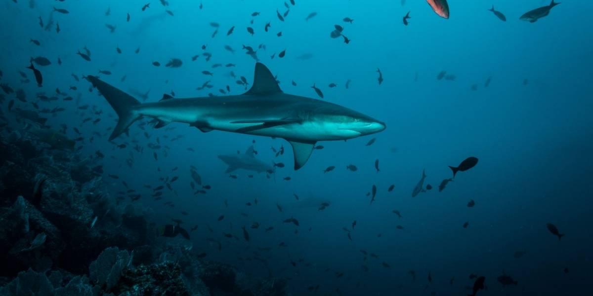 Procuraduría pide revocar resolución sobre pesca de tiburones