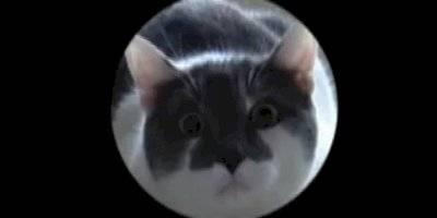 gatos pos
