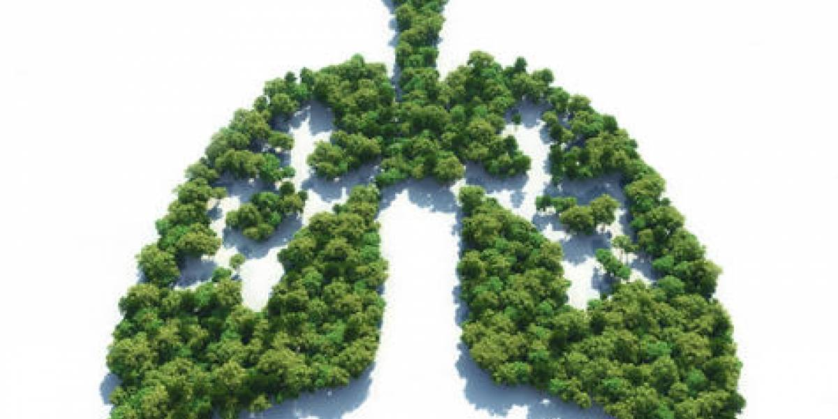 ¿Por qué los bosques nos pueden salvar del cambio climático?