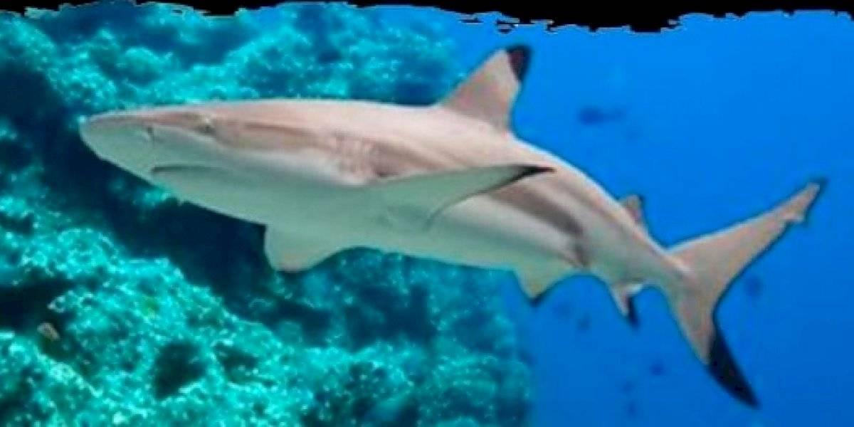 Um encontro assustador colocou um surfista de 7 anos e um tubarão-ponta-negra frente a frente; confira vídeo