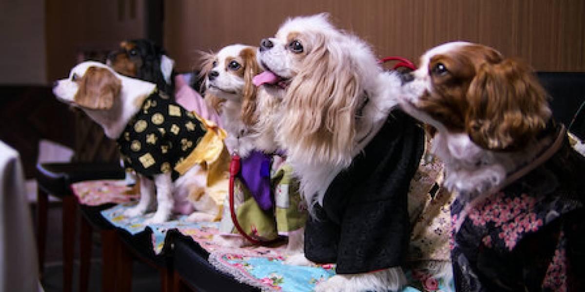 Netflix: 5 títulos com animais para curtir e se emocionar