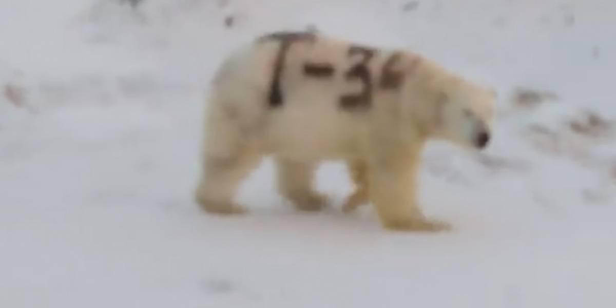El misterioso mensaje pintado sobre un oso polar