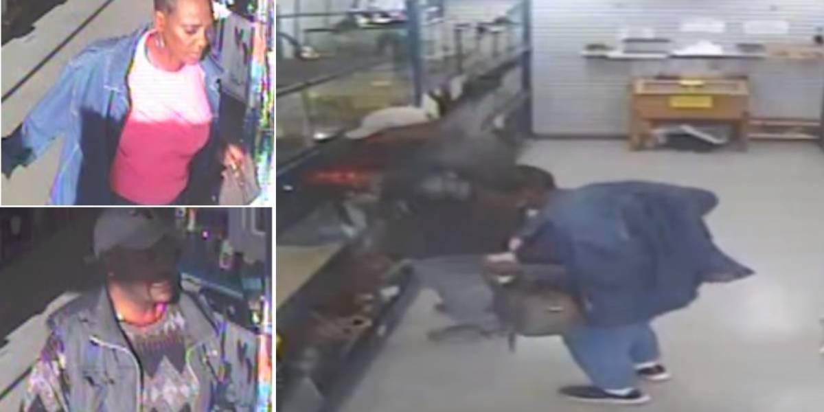 Câmeras de segurança gravam momento que píton é roubada de loja; polícia divulgou as imagens
