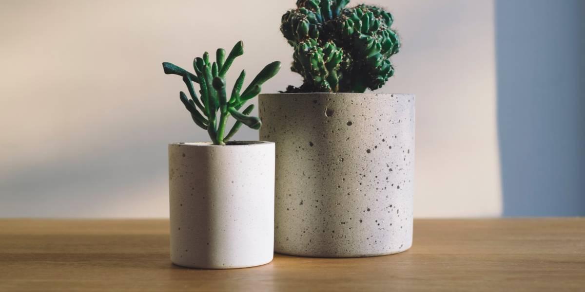 Estudo aponta: plantas decorativas não purificam o ar de casa