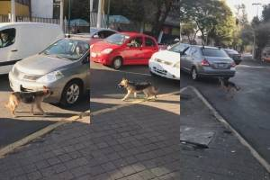 https://www.publimetro.com.mx/mx/destacado-tv/2019/12/05/perrito-abandonado-la-calle-persigue-auto-duenos.html