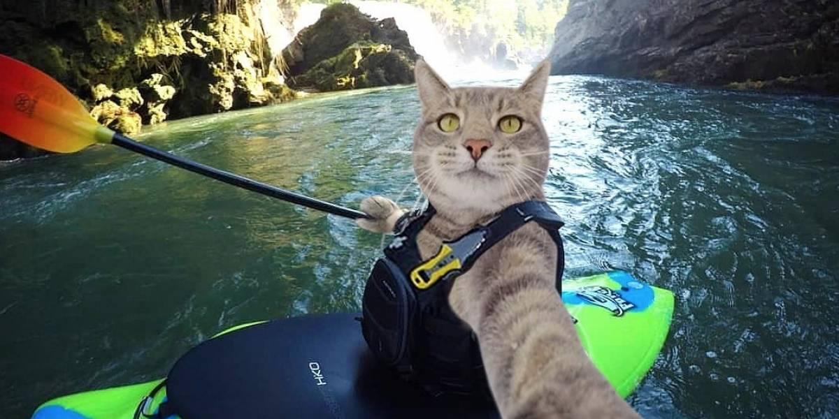 Este es el gato callejero que se convirtió en 'influencer'