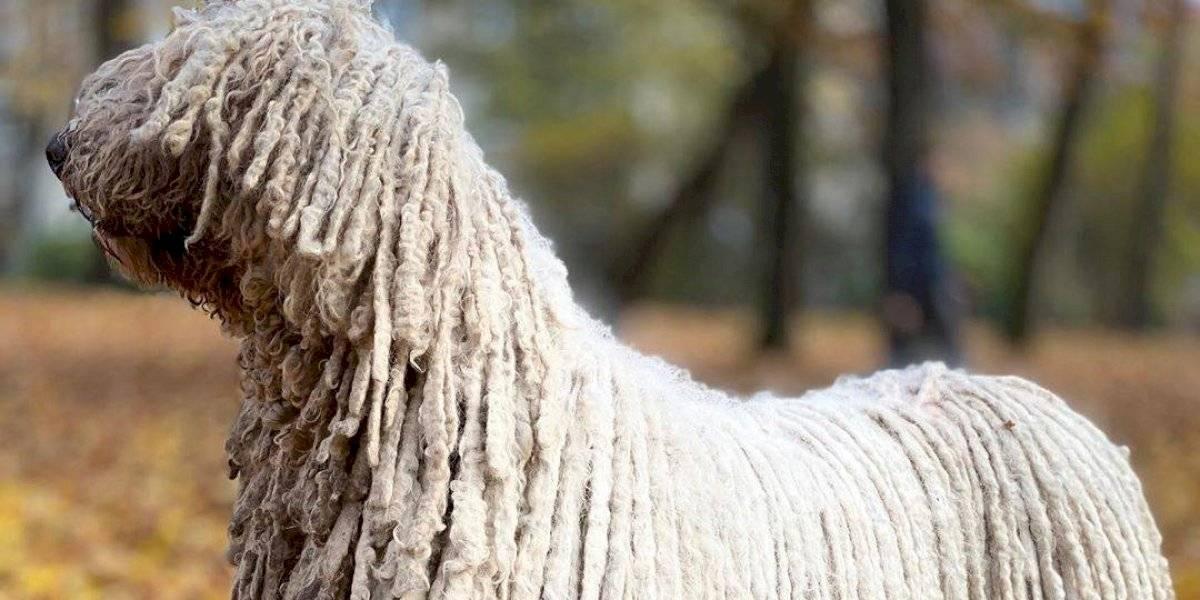 VÍDEO: Cachorro nadador parece um esfregão gigante