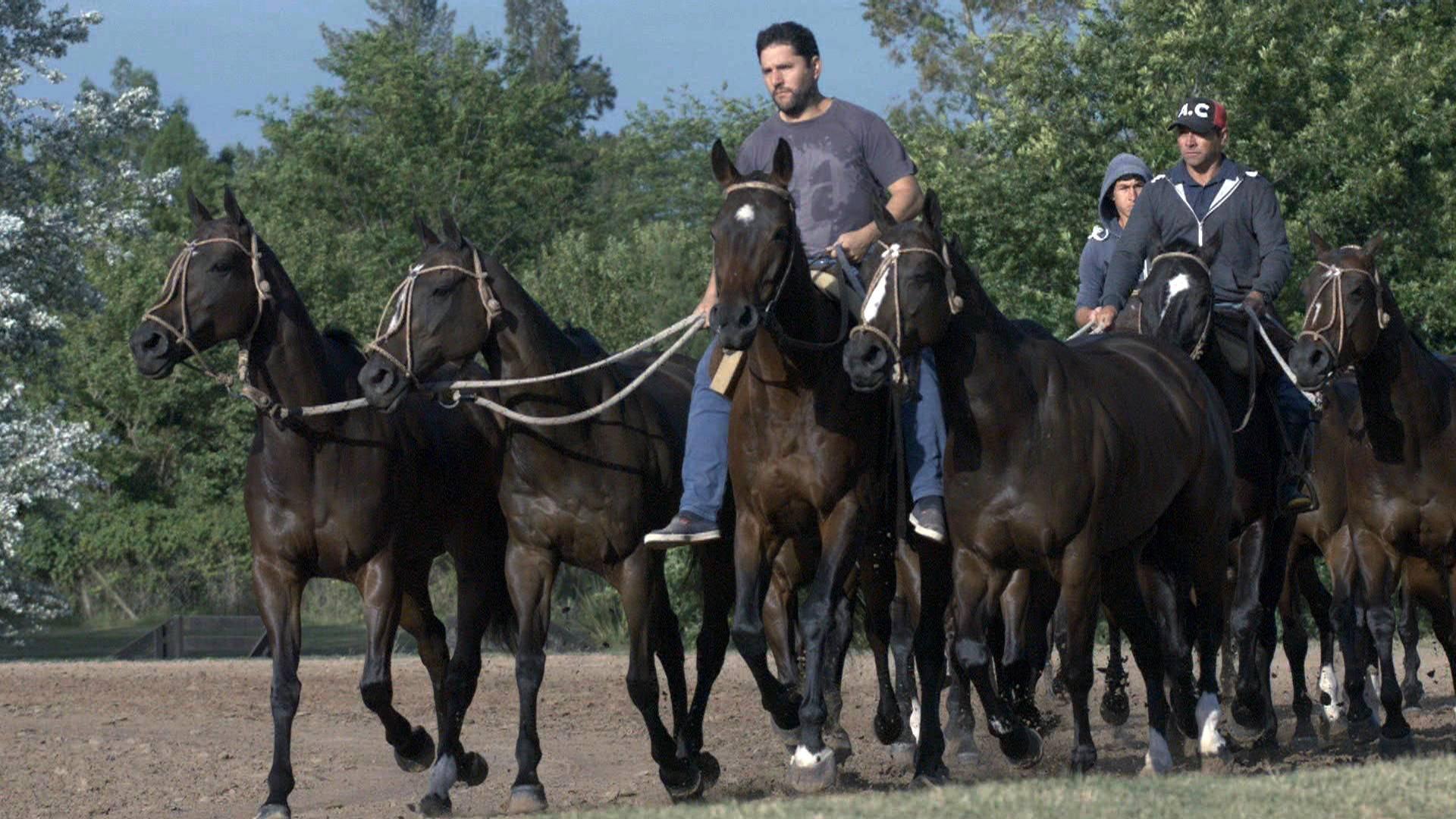 Ciencia caballos