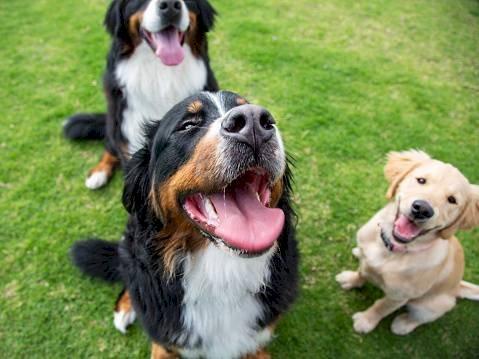 Playlist para mascotas Getty Images