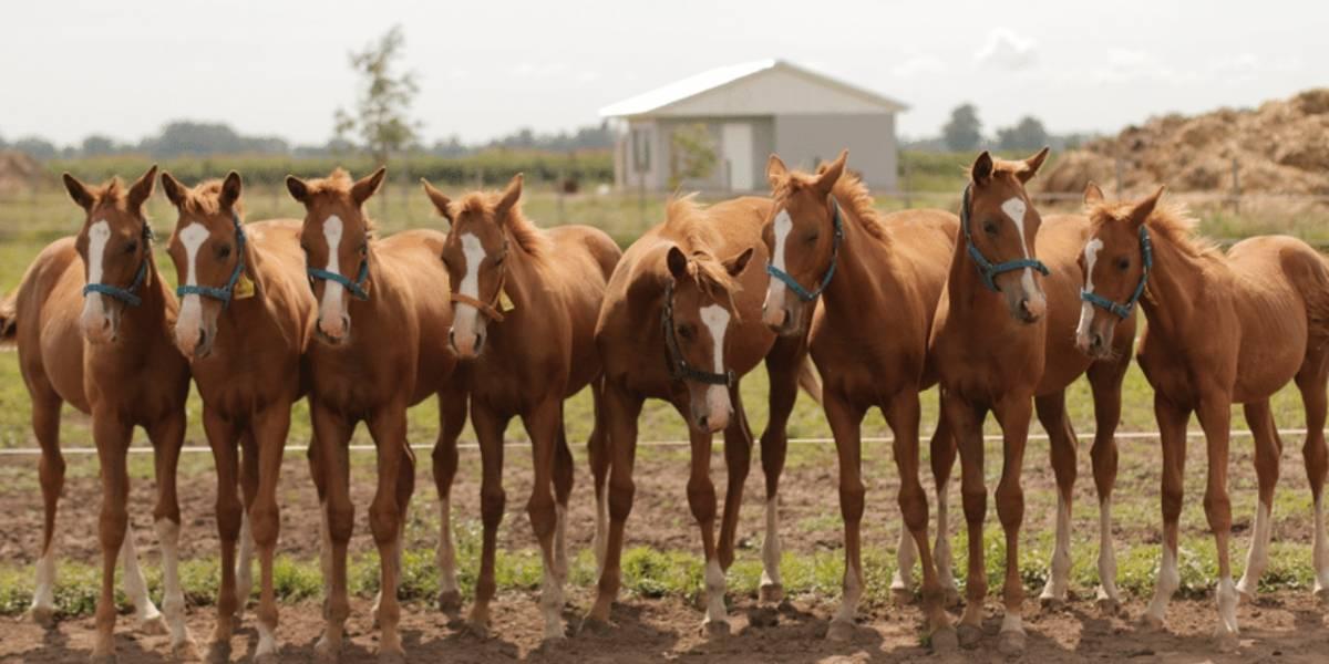 Ciencia: Cada vez son más los caballos clonados en eventos deportivos