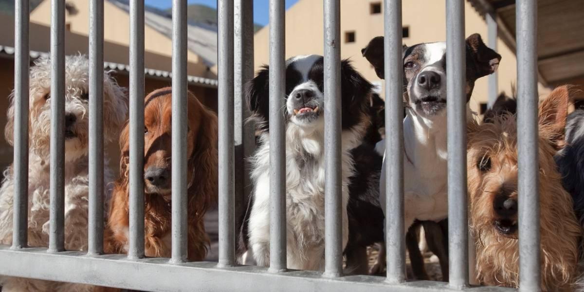 ¿Aprendieron? China tomó drástica decisión sobre la cría de perros para el consumo humano