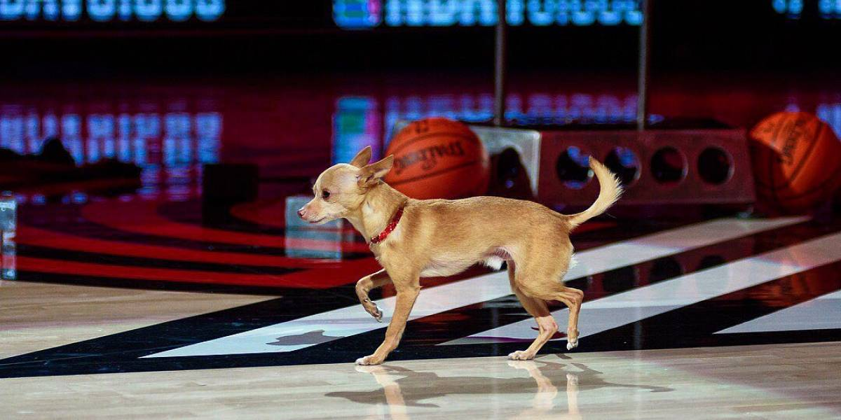 VÍDEO: Cachorrinho dança com seu dono em intervalo de jogo e conquista milhares de fãs na internet