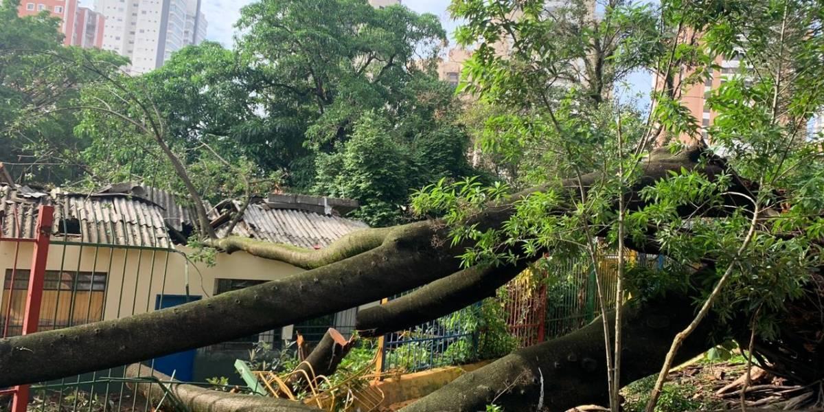 Árvore de 25 metros cai no telhado de creche na Vila Mariana