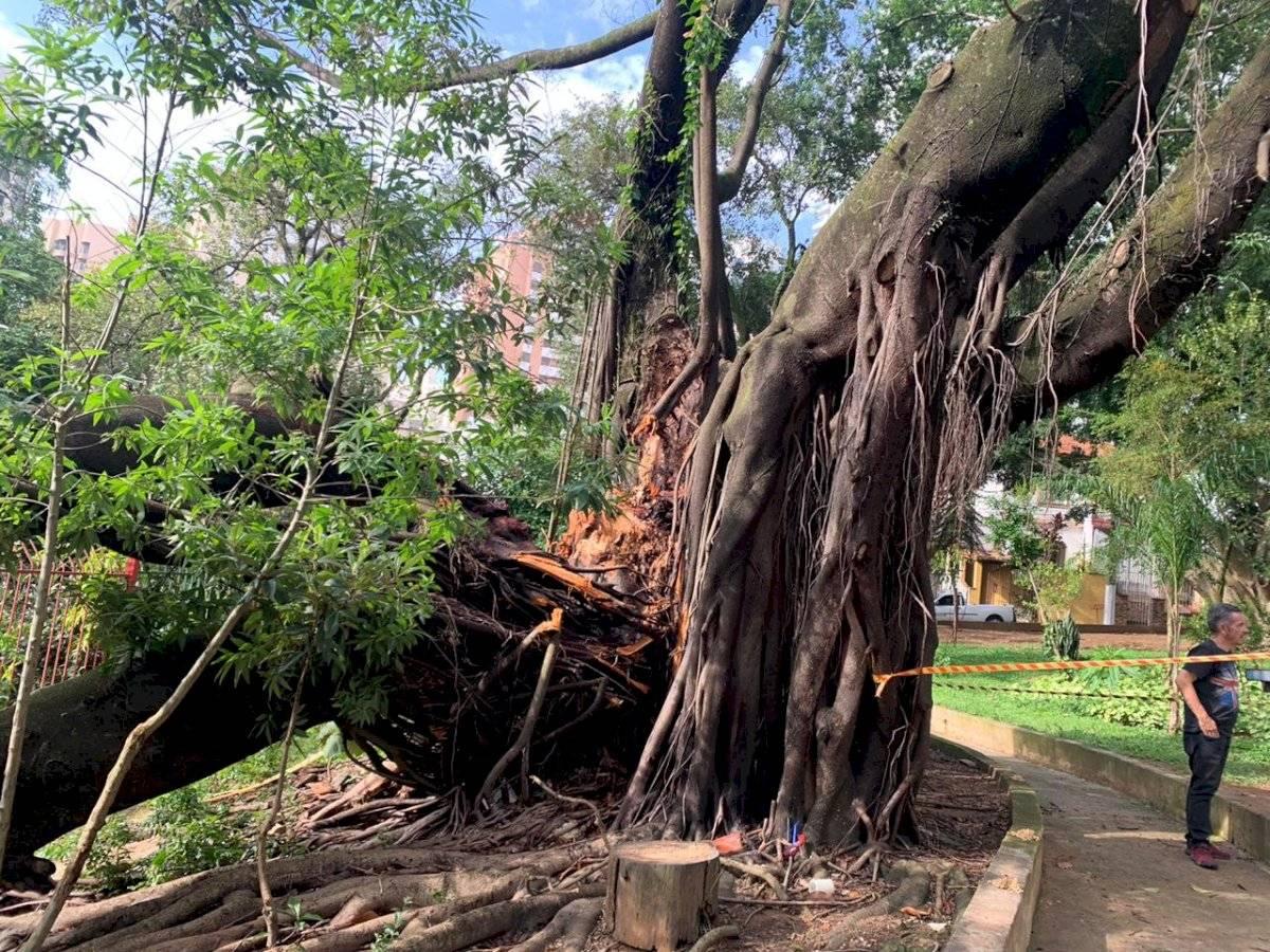 árvore creche vila mariana