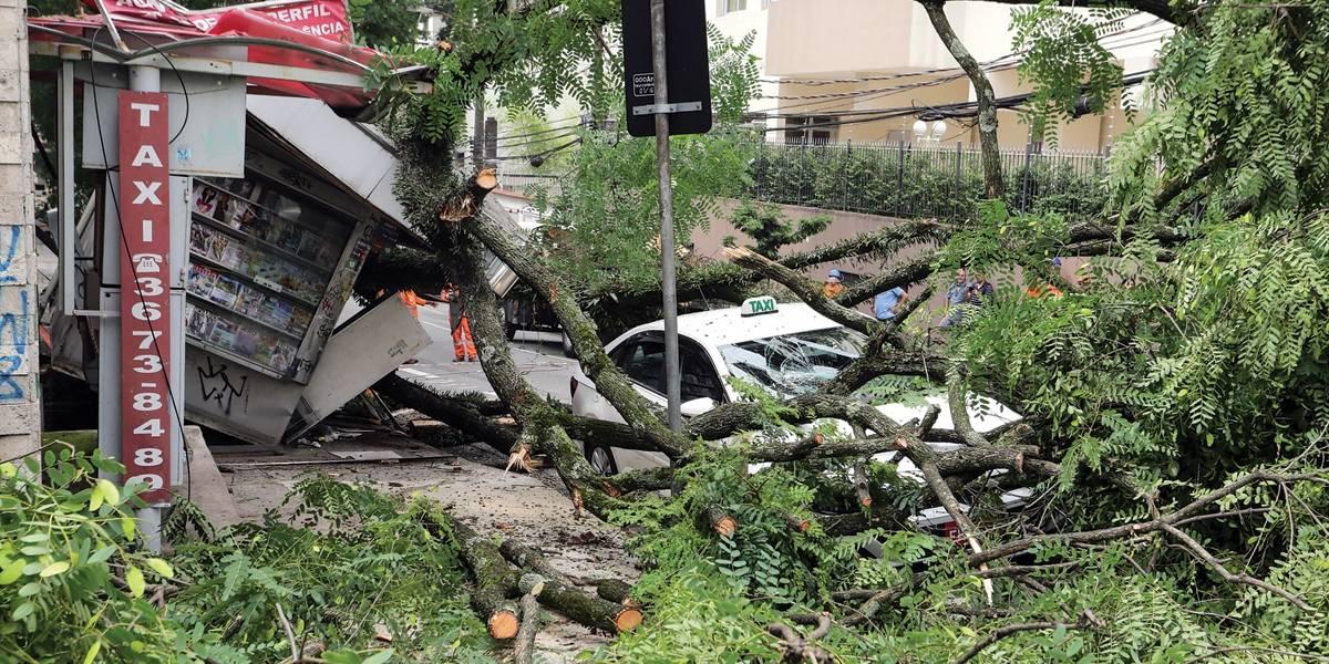 Árvores já causam danos antes do verão em SP