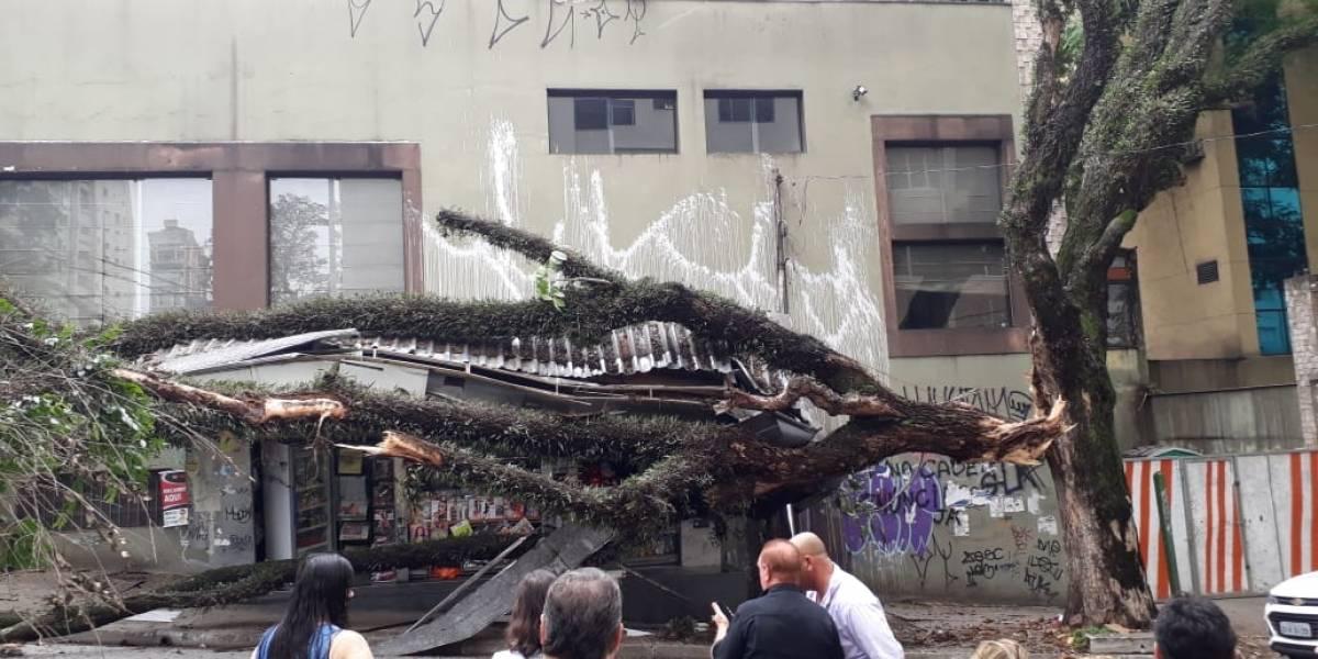 Ruas de Perdizes ficam interditadas após árvores caírem