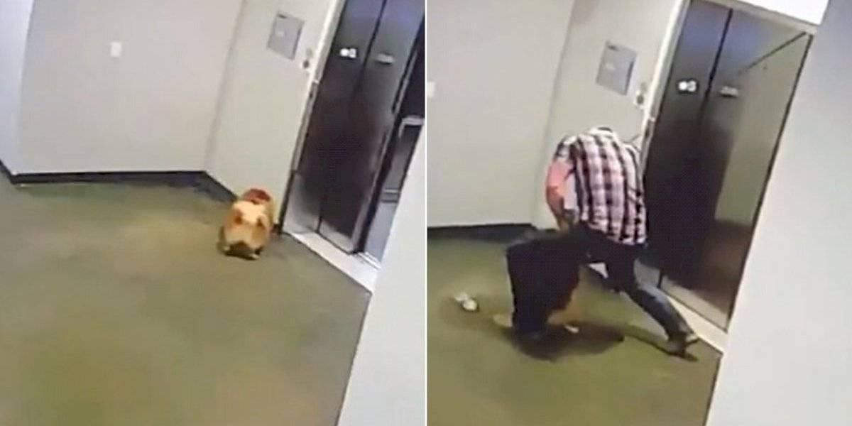 Vídeo flagra momento em que homem salva cachorro de morrer enforcado em elevador