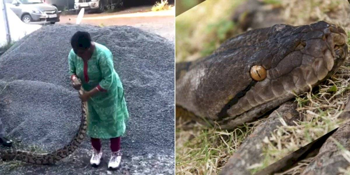 VÍDEO: Mulher lidera resgate de píton de 20 kg e captura cobra com as próprias mãos