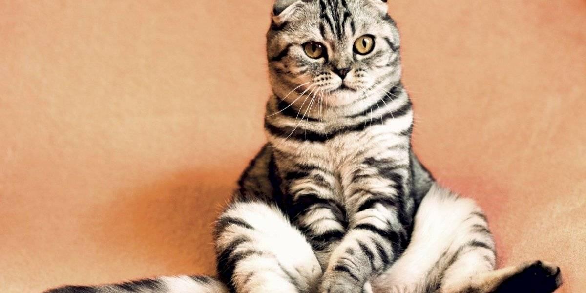 Estas 10 fotos de gatos vão mostrar o quanto estes pets não estão nem aí para o espaço pessoal do dono