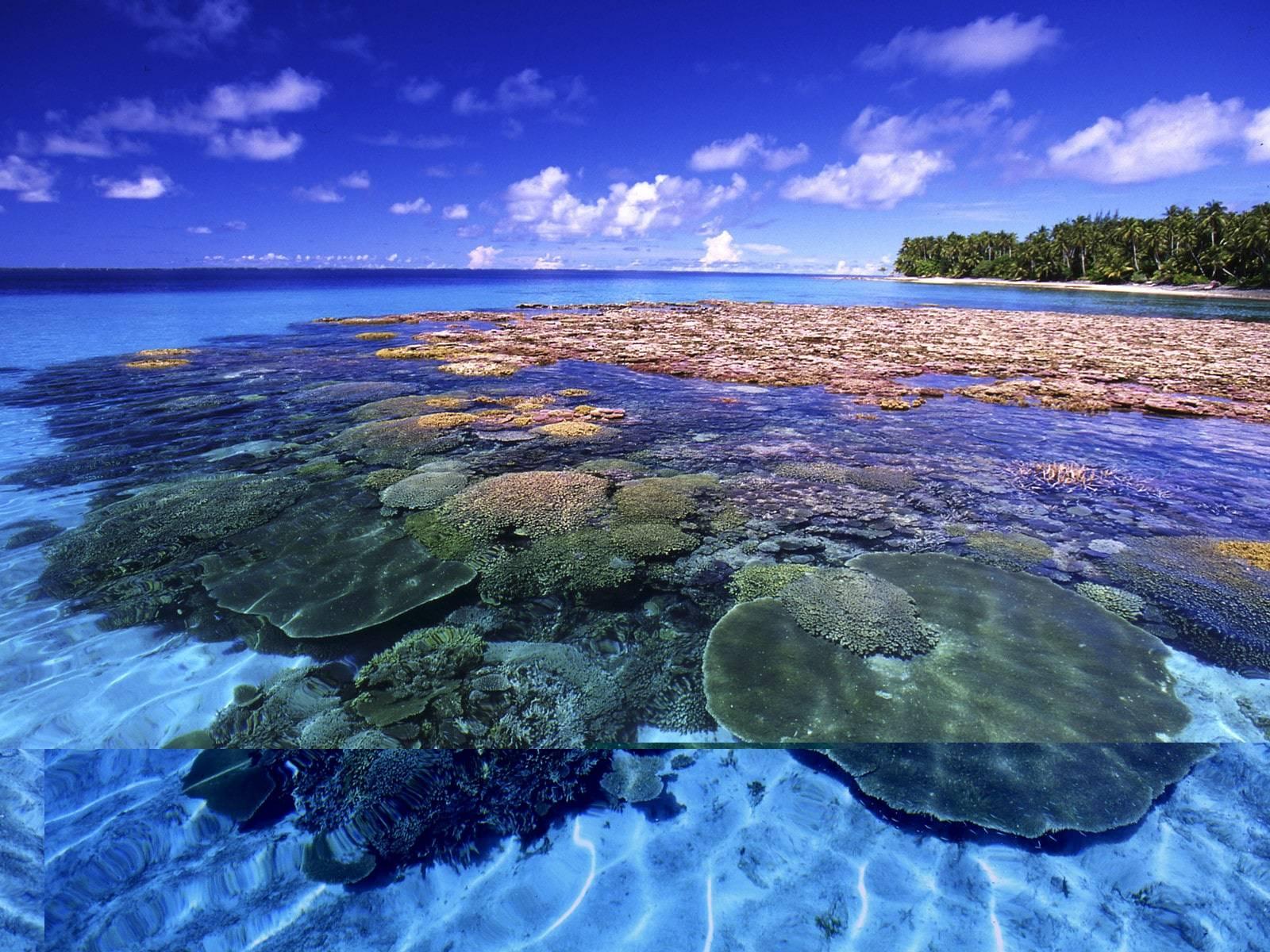 Investigación demuestra que islas Marshall tienen altos índices de radiación