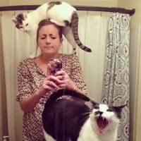 ridiculouscatsdo-d6e926c603e5e8d84e5bf360d7603040.jpg