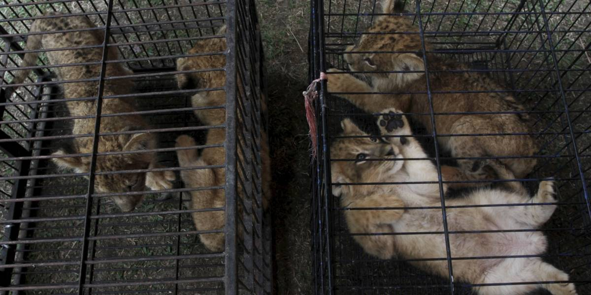 Indonesia arresta a dos presuntos traficantes de animales