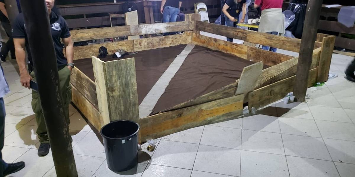 Presos em rinha de cães em Mairiporã passam por audiência de custódia nesta segunda