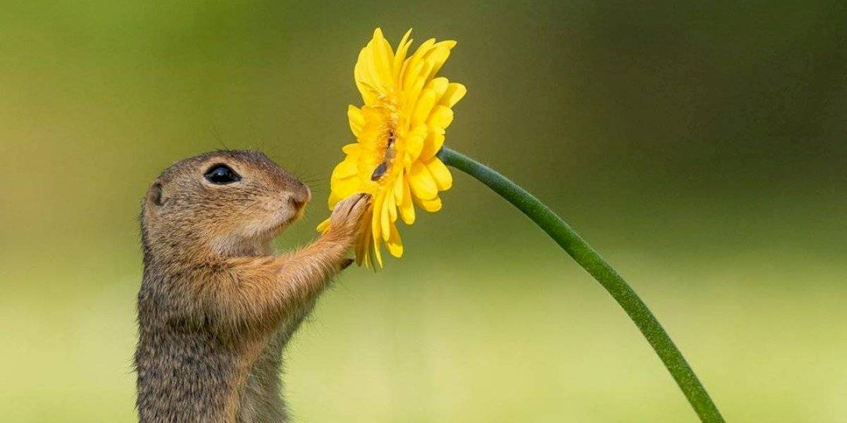 Fotógrafo registra momento fofo de esquilinho cheirando uma flor em série de imagens