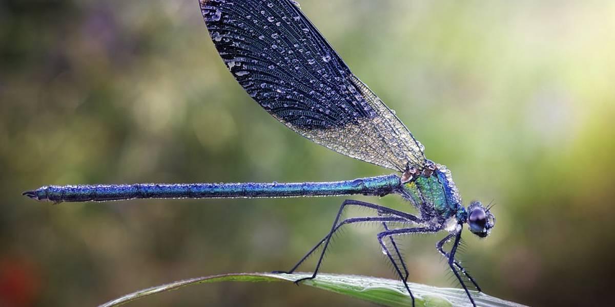 Estes 17 closes de insetos e outros bichos cobertos de gotas de chuva vão te deixar boquiaberto