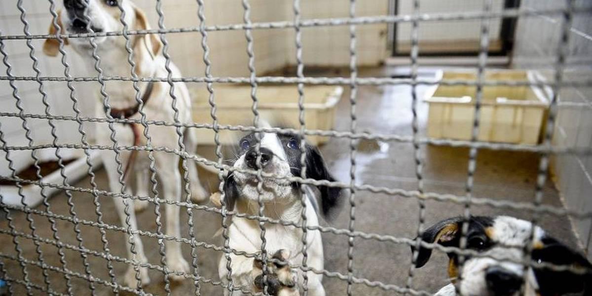 Câmara endurece penas para quem comete maus tratos a animal doméstico