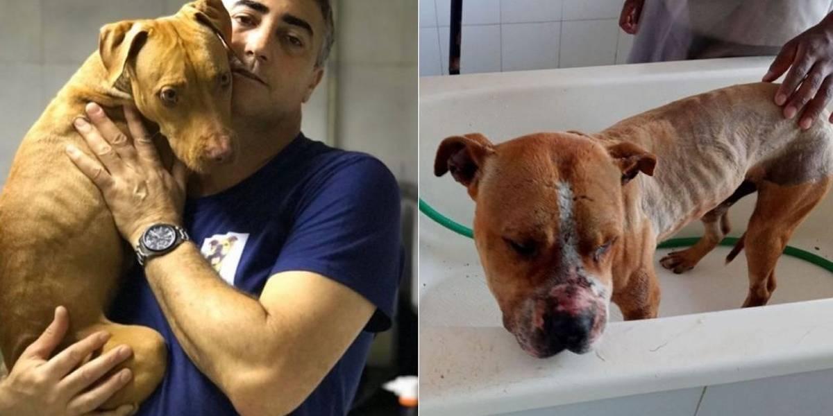 Protetor que resgatou pit bulls de rinha em Mairiporã precisa de ajuda para cuidados com os cães