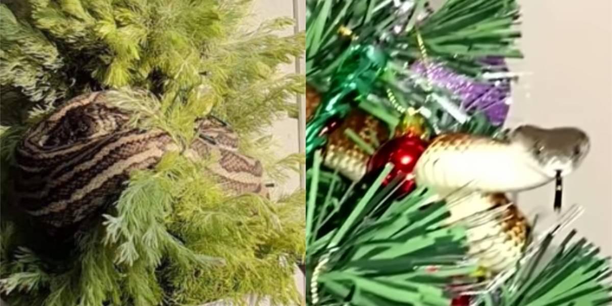 (VIDEO) Serpiente en árbol de navidad le dio gran susto a una pareja