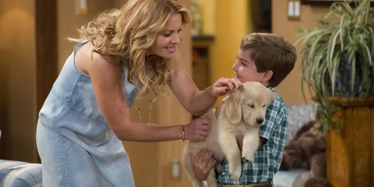Cachorro de série da Netflix morre aos 4 anos; elenco lamenta a perda