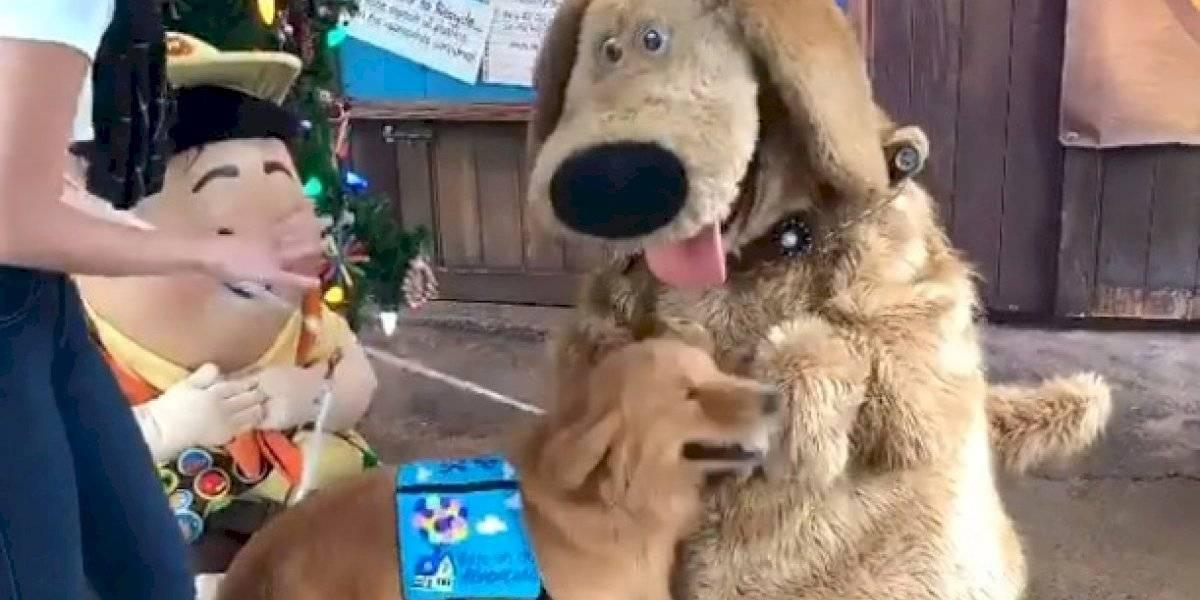 Vídeo de cão de serviço encontrando ídolo na Disney se torna viral nas redes sociais
