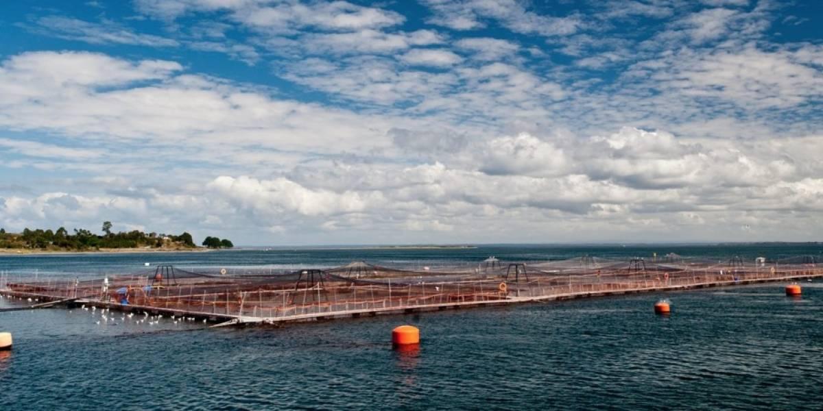 """FNE desmantela al """"Club de Toby"""" por colusión: Tres empresas productoras de alimentos para salmón pueden ser sancionadas con US$ 70 millones"""