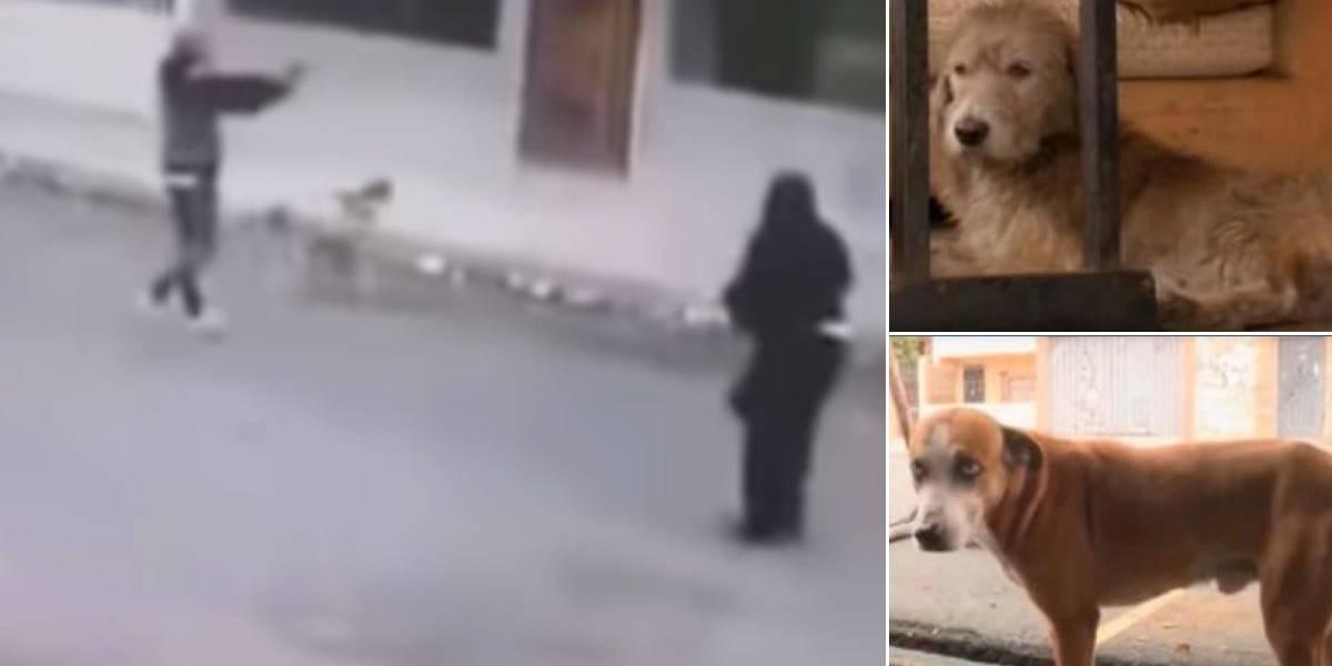 ¡Héroes de cuatro patas! A punta de ladridos, dos perritos salvaron a mujer de ser robada