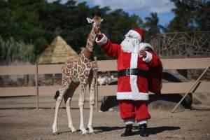 Navidad en el Zoo La Aurora