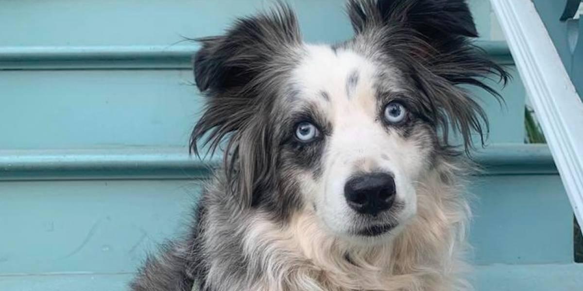 Mujer ofrece recompensa de $7,000 dólares por su perro robado
