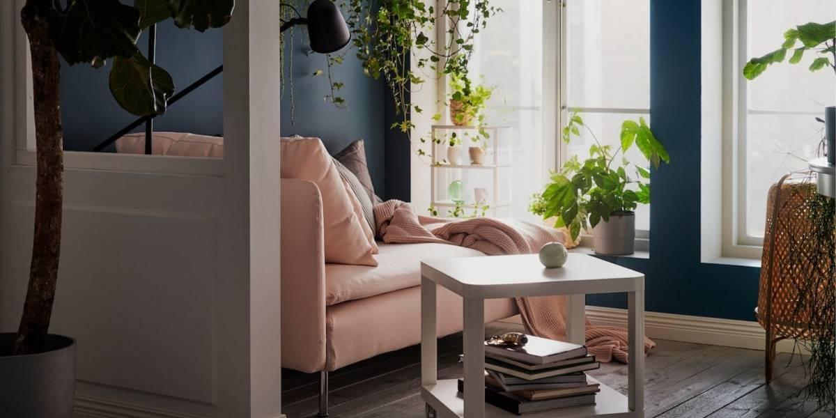 Decoração: 5 maneiras de usar plantas para dar nova vida à sua casa