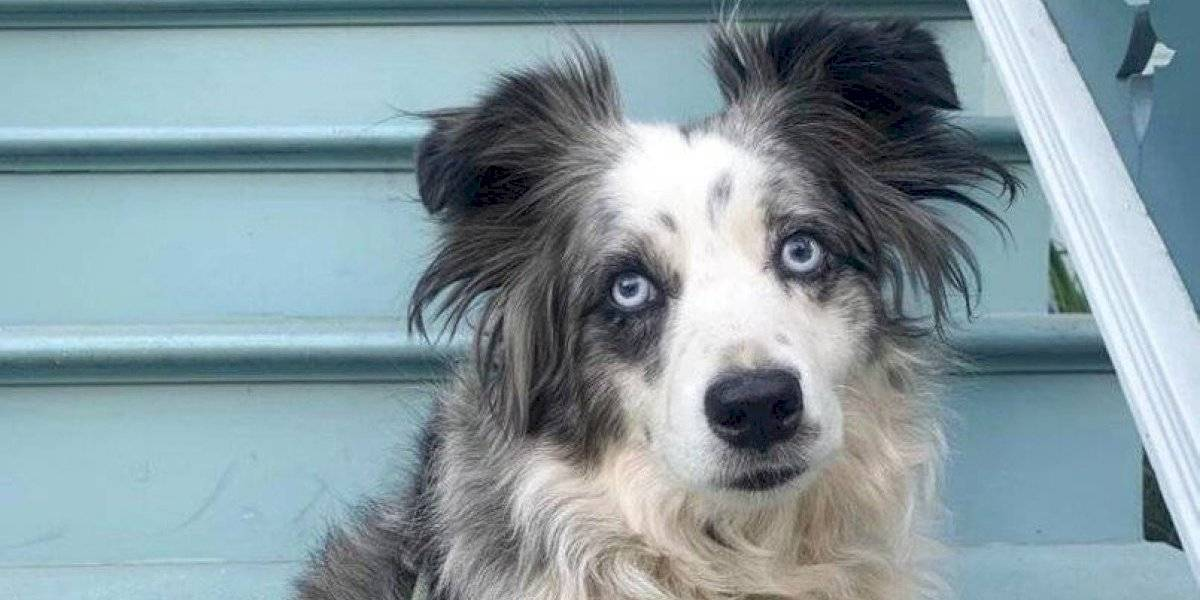 """""""Siempre está conmigo. Es amor verdadero"""": mujer ofrece 5 millones de recompensa y contrata avión privado para encontrar a su perrito desaparecido"""
