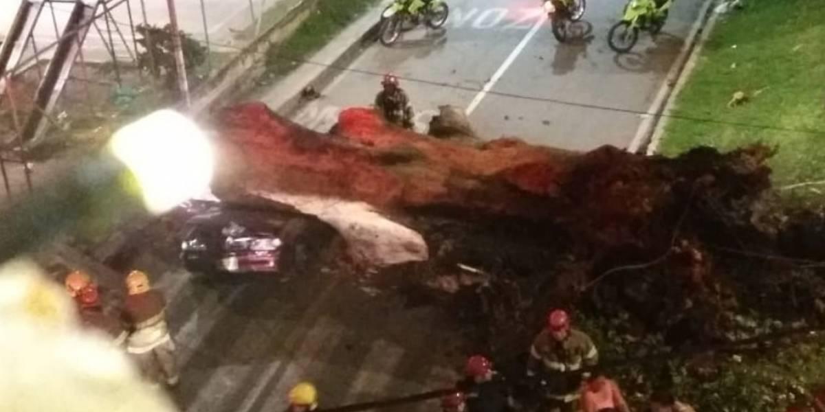 Enorme árbol cayó sobre un vehículo y terminó con la vida de una persona