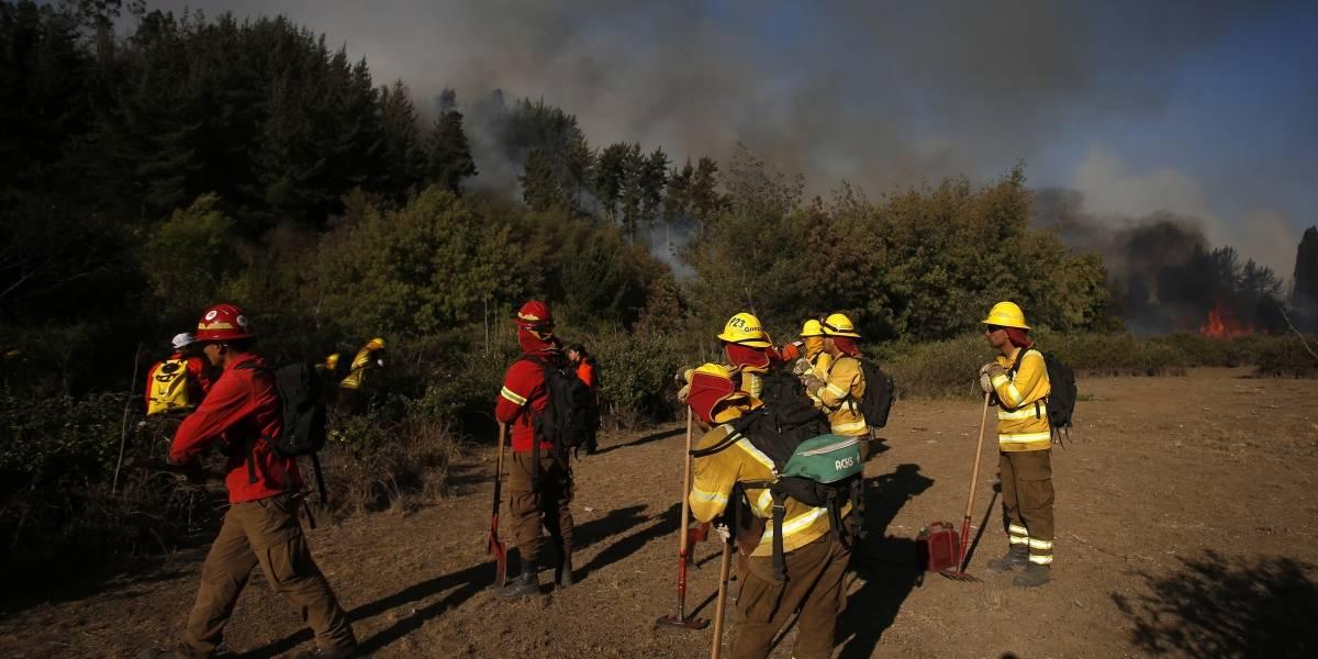Alerta Roja en Olmué: el incendio está cerca de sectores habitados y del Parque Nacional La Campana