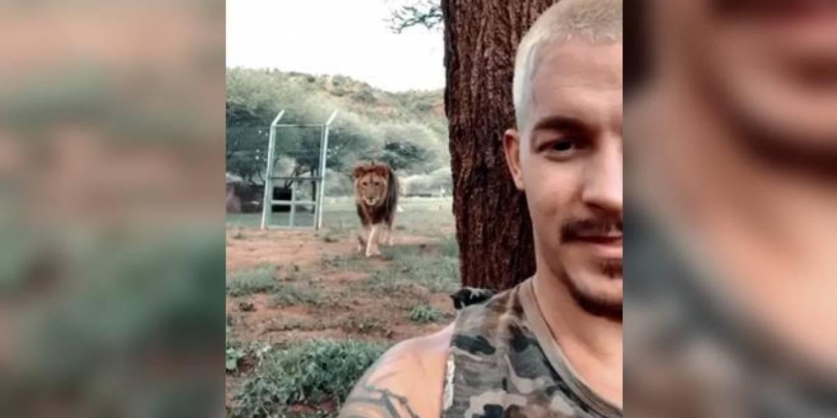 Vídeo viral mostra homem fazendo selfie enquanto leão prepara ataque