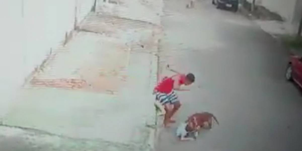 VÍDEO: Jovem salva criança do ataque de pitbull feroz no Rio de Janeiro